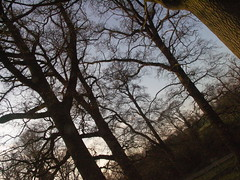 Autum Forest (flickarys) Tags: sunset lake reflection tree reed water parish forest sunrise fence mirror hall duck northampton sheep autum rugby meadows retro civil rotten leafless fawsley daventry
