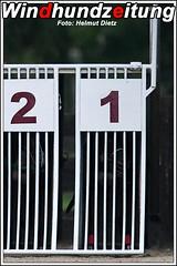 CGRC European Derby Semi Final: Greyhound Malheur beim Start