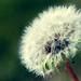 Weeds Need Love Too