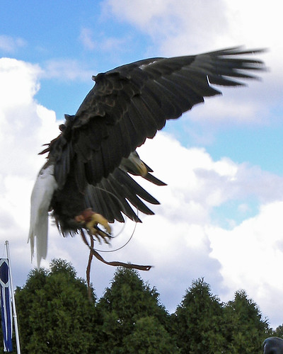Games - Eagle flight 2