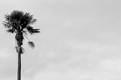 IMG_0765a (Noel Moloney) Tags: blackandwhite tree cork fota lcfe