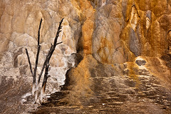 Stark - Yellowstone National Park - WY (sandy_gennrich) Tags: morning orange usa tree mammoth yellowstone nationalparks hotsprings wy wwwsandygennrichcom