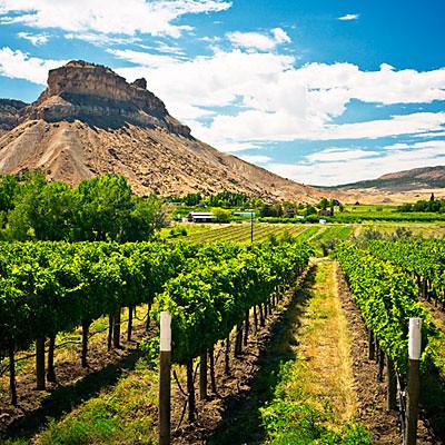grand-valley-vineyard-1010-l
