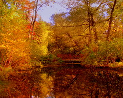 Autumn Reflections (**Ms Judi**) Tags: park bridge blue trees sky fall water beautiful golden pond peaceful lovely godsgift henespark autumnreflections msjudi judistevenson judippc photographybymsjudi
