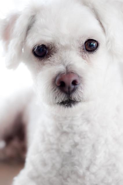 98/365 Handsome Pup