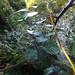 Cotswolds Yurt - Dewey Spiderweb