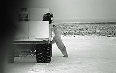 Churchill, Canada #8 (PositiveAboutNegatives) Tags: leica film manitoba sl polarbear summicron xp2 90mm ilford polarbears leicaflex leitz tundrabuggy 11219 leicar leicaflexsl 90mmsummicron churchillcanada leicafilmphotography freefilmimages freefilmpictures