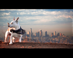 Super Dog (Emmanuel_D.Photography) Tags: park dog sunrise la losangeles cool awesome bolt 5d f2 griffith hercules emmanuel astig kickass 135mm mark2 135l f2l 5dm2 dasalla