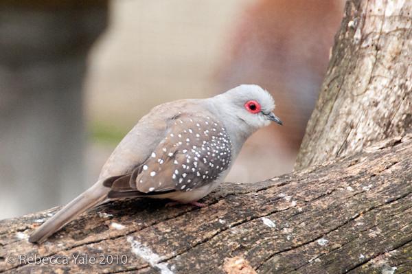 RYALE_African_Dawn_Birds_40
