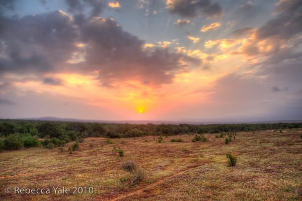 RYALE_SA_National_Park_Addo_104