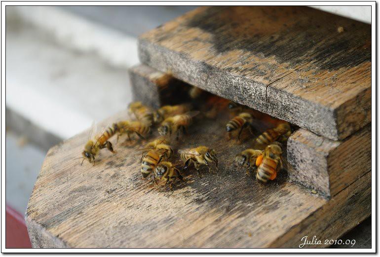 蜂采館~ (11)