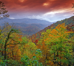 Under the Autumn Storm (David Shield Photography) Tags: autumn trees storm color fall nationalpark seasons tennessee foliage collection works smokies marvelous smokiemountains greatsmokeymountainnationalpark of naturesgreenpeace