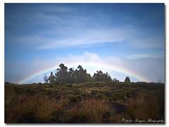 Rainbow (Paragon-Photography) Tags: trees art nature rain landscape photography hawaii photo rainbow olympus maui haleakala hana paragon