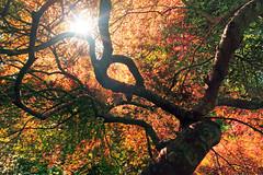 [フリー画像] 自然・風景, 樹木, 紅葉, 201010130700