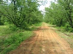 531007 เตาเผาถ่านกรมป่าไม้ 257