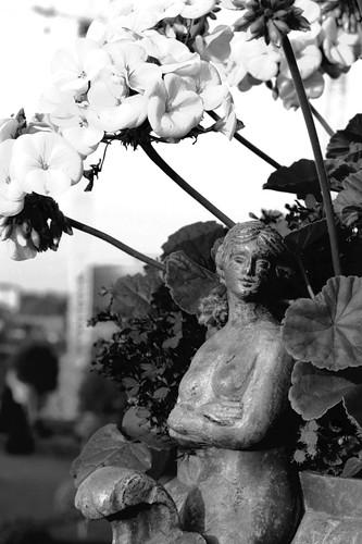 Flower Pot, White Pelargonium