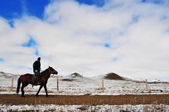 Rider (MelindaChan^^) Tags: china horse snow chinese culture mel melinda grassland bashang mongolian innermongolia    chanmelmel melindachan