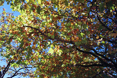 fujiXtra400_201010h (Himmel-R) Tags: autumn fall film fuji herbst iso contax negative 400 g1  negativ xtra g28 g45