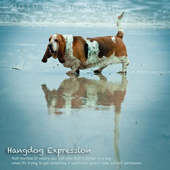 Life? Don't talk to me about life! (hangdog expression) (s0ulsurfing) Tags: blue england dog pet reflection eye english praia beach nature wet woof canon reflections square fur fun coast mar sand eyecontact cornwall dof sad natural zoom quote lol fat tail shoreline hound blues droopy ears canine september reflected telephoto shore floppy definition 7d stare watersedge misery breed pooch staring bassethound dictionary markings squared obese selfpity thehitchhikersguidetothegalaxy douglasadams overweight 2010 glum jowls kernow stride wetsand longface marvintheparanoidandroid hangdog dwarfism s0ulsurfing porthreath shortlegged coastuk thedictionaryofimage hangdogexpression reflejazo