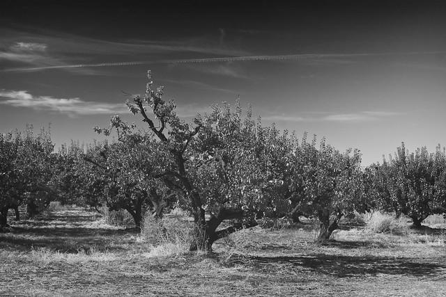 Grayscale Almonds