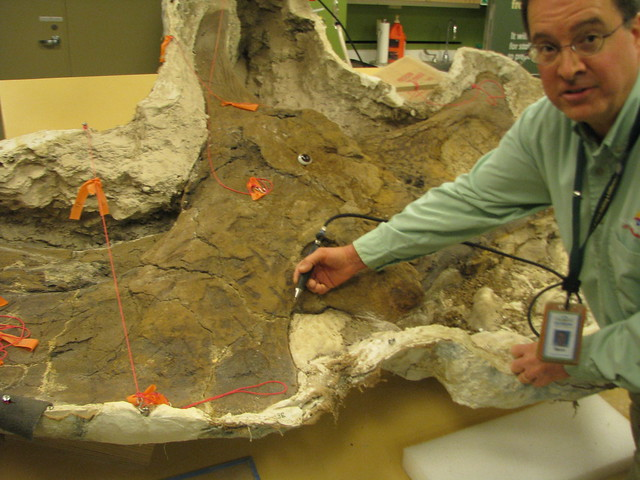 Mark Sims with Triceratops skull in progress