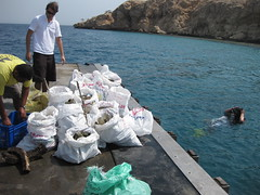 CDWS, Red Sea, 2010 (CDWS Chamber of Diving and Watersports) Tags: jetty redsea egypt sharmelsheikh cleanup naamabay projectaware cdws