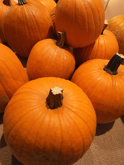Pumpkin Patch? in my house
