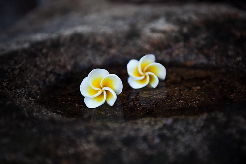 Frangipani, ASthachal, Rishi valley - Chitra Aiyer Photography