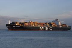 MSC Alessia (angelo vlassenrood) Tags: boot ship nederland vessel container alessia msc schip westerschelde walsoorden