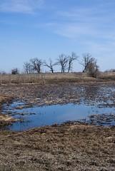 Весна (equinox.net) Tags: небо вода лужа деревья грязь пвд