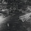 Them Bones (OverdeaR [donkey's talking monkey's nodding]) Tags: bw abandoned 120 6x6 film true canon mediumformat square noir tech kodak serbia places s scan dirt negative bronica technical scanned bones bone pan them but spine belgrade mold dust tp beograd smelly sqa bizzare aaaa aic srbija f35 105mm fabrika 6415 10535 8800f zenzanon 100ei glutin cs8800f tp6415