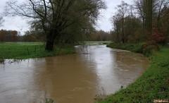 DSC01923 (AdriH) Tags: november river rains 2010 dyle