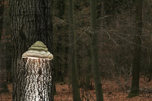 Forest Lamp