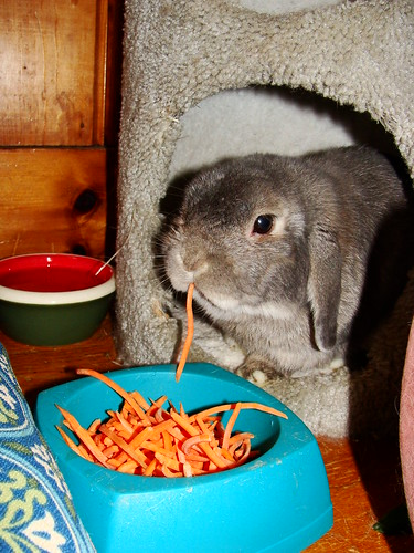 Pippin with carrots