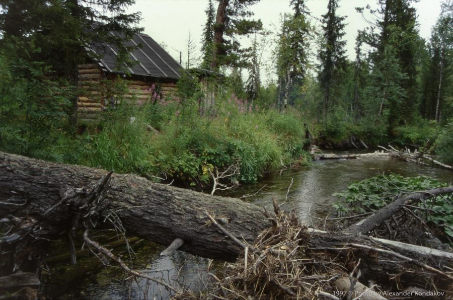 Изба в лесу 1997 © Photo by Alexander Kondakov