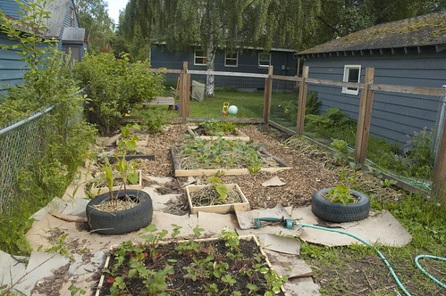 the whole garden.  We need to go get more woodchips and finish the pathways...all along the left side are raspberry bushes and the big bush in the cor
