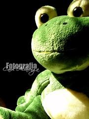 Ceg *.* (Carolina Alvarenga) Tags: verde green photography photo foto photos plush fotos toad sapo fotografia pelcia