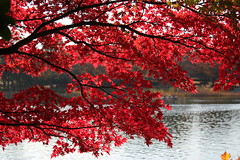 Red leaves at water / 水辺の紅葉