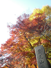 高尾山 - Mt.Takao
