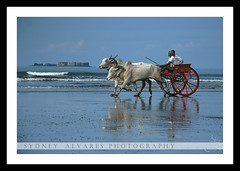 TRAVEL - Murud Beach (Maharashtra, India) ($ydney) Tags: drisyam2010exhibit