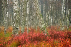 The pink forest (flowerpics09) Tags: