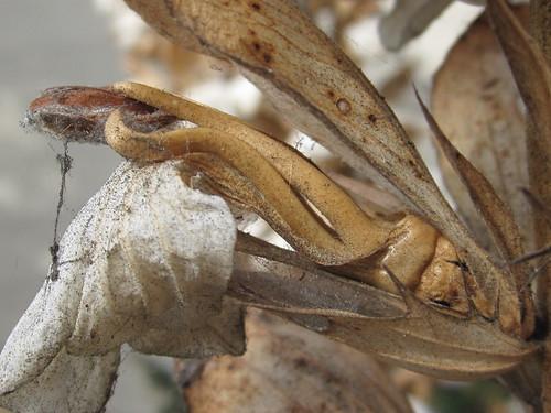 Aged Plant