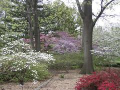 English Woodland Garden