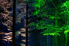 Enchanted Forest 43/45 (itmpa) Tags: wood trees light tree slr night forest canon dark scotland perthshire lit nophotoshop enchanted enchantedforest pitlochry unedited 30d faskally canon30d straightfromthecamera faskallywood lochdunmore lightingshow bigtreecountry tomparnell itmpa archhist