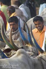Cow Auction | A Village near Hosur (get2shaan) Tags: road morning sky mist clouds canon eos village bangalore foggy sigma mm karnataka 1020 hosur shaan 1000d