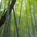 "Path of bamboo, Kyoto • <a style=""font-size:0.8em;"" href=""https://www.flickr.com/photos/40181681@N02/5208512120/"" target=""_blank"">View on Flickr</a>"