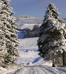 On my way to the village Poppenwind (:Linda:) Tags: snow tree pinetree pine germany