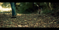 Walking on dead leaves (Photoskatto) Tags: autumn fall colors leaves foglie composition photoshop canon photography 50mm prime photo reflex flickr dof graphic kodak bokeh f14 14 depthoffield explore crossprocessing acr usm dslr vignetting autunno e6 grafica viraggio composizione breathless prophotographer cs3 bleachbypass cameraraw c41 ef50mmf14usm canonlens ef50mm presets vignettatura kodakc41 postproduzione colorgrading 40d meteringmode centerweightedaverage eos40d canon40d acrpresets exposureprogram kodake6 aperturef14 aperturepriorityae luigiscattolin