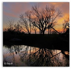 Liebestraum (Dora Joey) Tags: sunset reflection tree love river tramonto fiume dream reflejo albero amore riflesso sogno sile traum