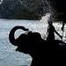 大象洗澡 / Elephant bathing